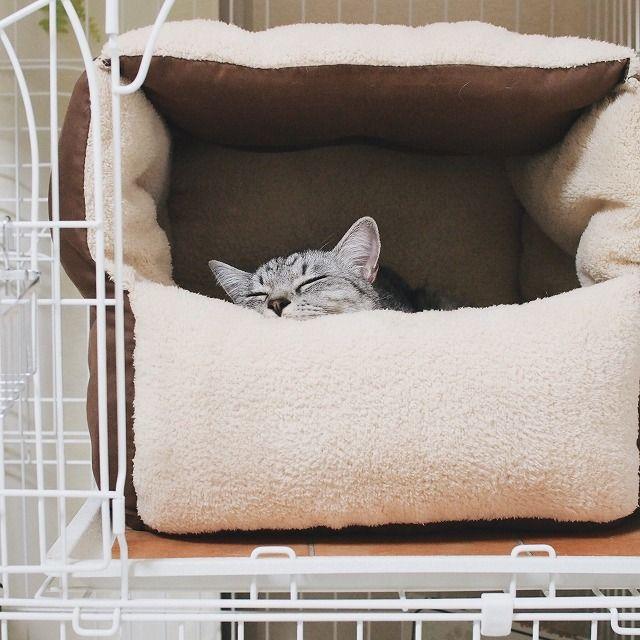 ダイソーの座布団で猫ベッドを作ってみた 今日も猫と 猫 こたつ 猫 ベッド 手作り 犬の家具
