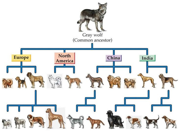 9 Dog Breeds Closely Related To Wolves Husky Lovers Origin Of Dogs Dog Breeds Dogs