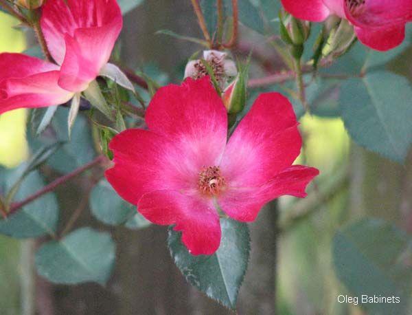 beautiful italian flowers   DIGITAL PHOTO WORLD   Photo Gallery   Rome   Italy   Most beautiful ...