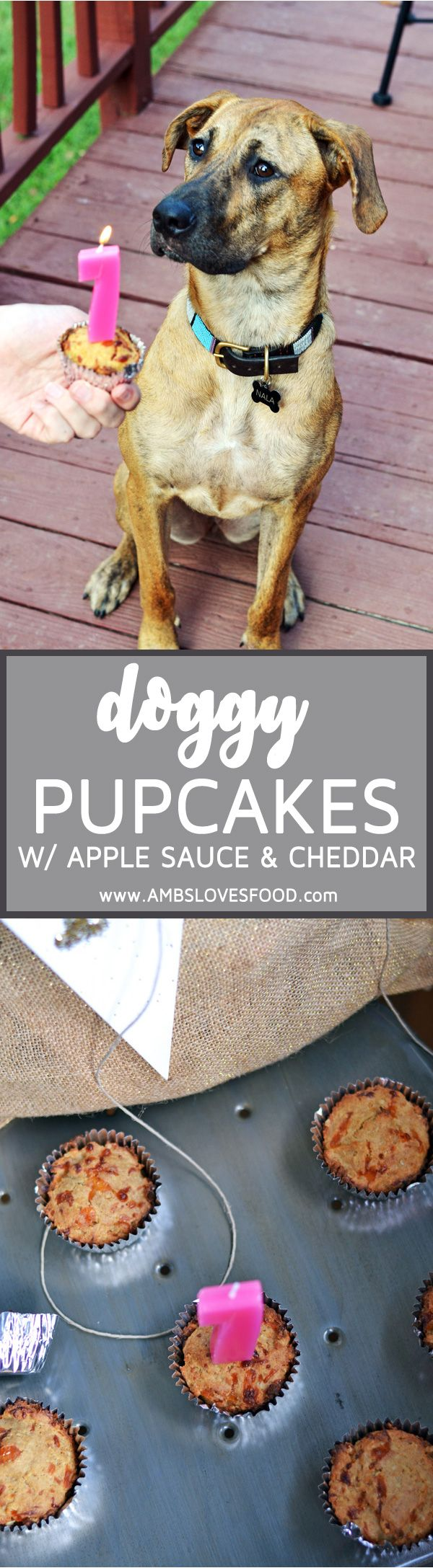 Nala turned ONE last month and to celebrate we did ALL of her favorite things on her birthday and I made her these Dog Pupcakes with Applesauce and Cheddar as her birthday cake! I think it was the best day she has ever had in her whole year on this earth and she couldn't get