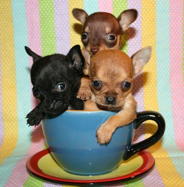 pups in cup, so cute!