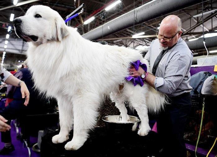 12 Dog Breeds That Don T Mind Being Left Alone Westminster Dog