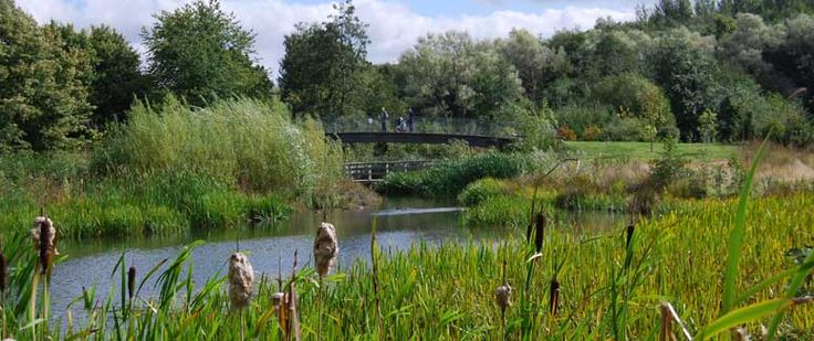 The lovely reed beds