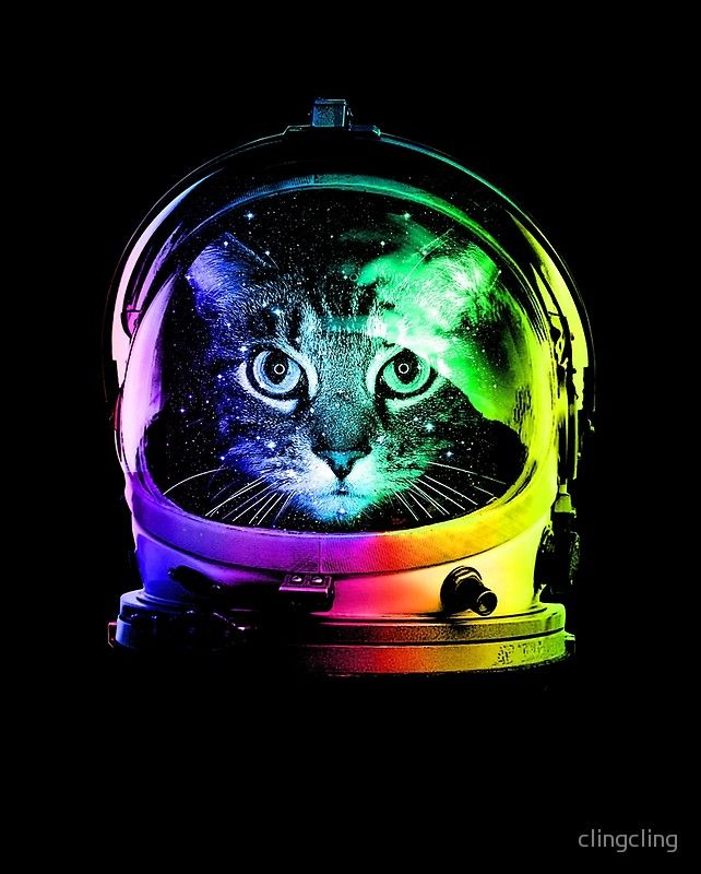 Astronauta Cat De Clingcling Redbubble Posters De Gatos Gato Espacial Casco De Astronauta