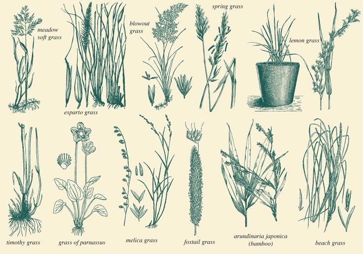 Wild Grass Vectors