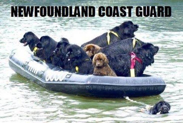 newfoundland coast guard