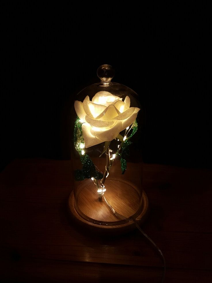 Cream rose lit up in a dome