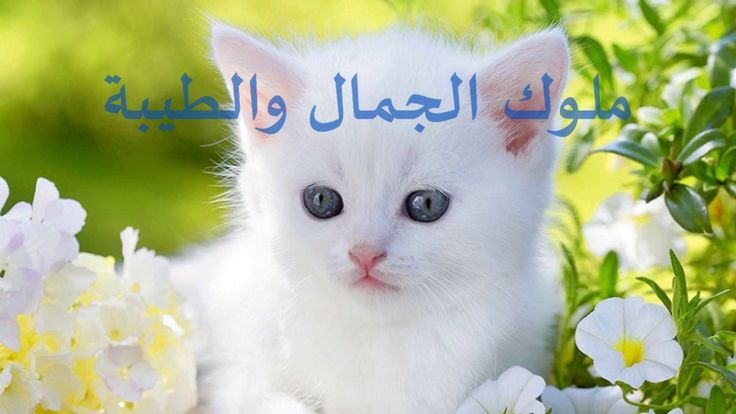 مواليد شهر مارس الأكثر أناقة ورقيا Animals Cats