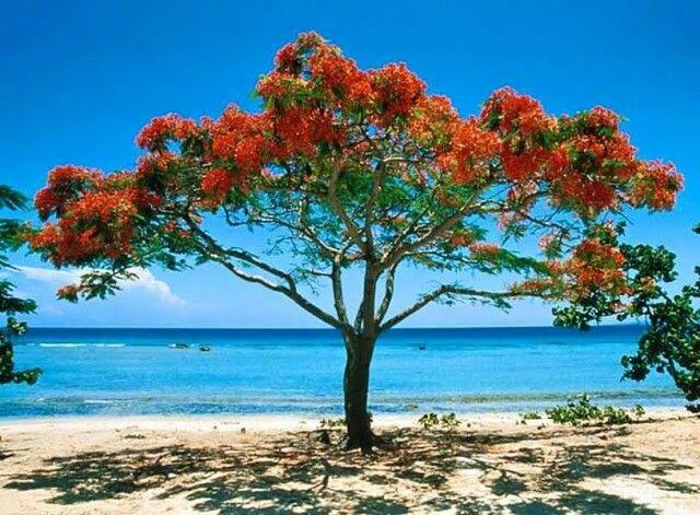 Playa ancon de trinidad, cuba