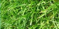 What Type of Grass Grows Best in Red Clay Soil? | eHow.com