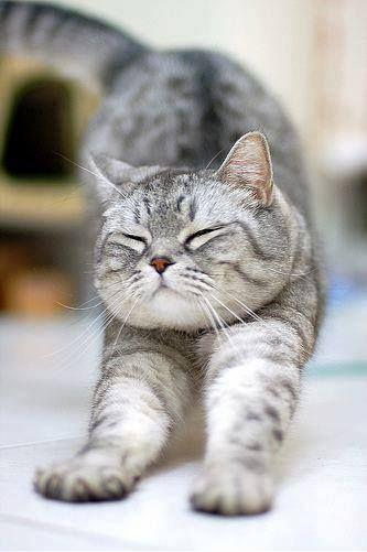 Good Morning... Cats のび〜