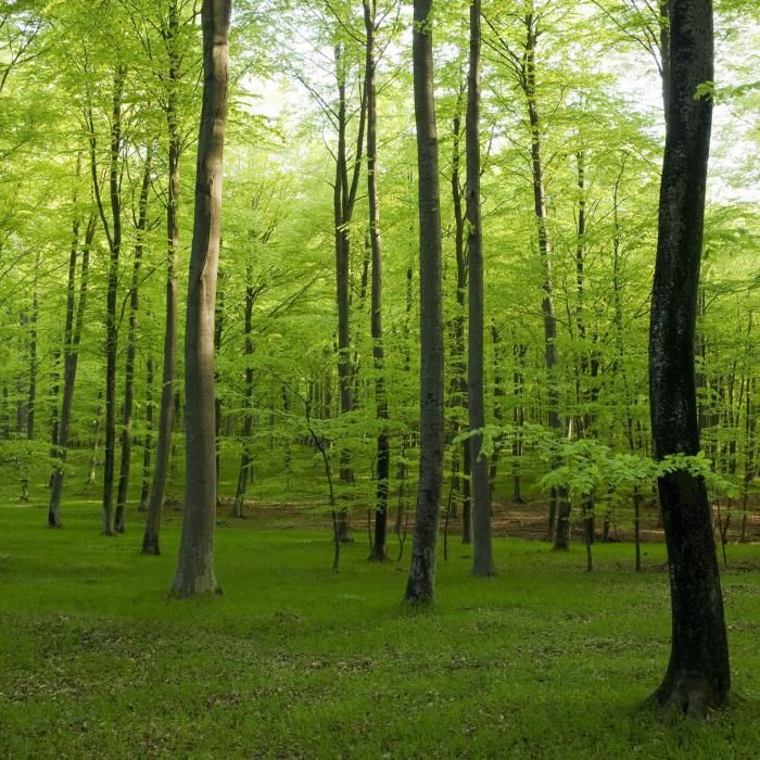 Landskaper - Fototapeter og Tapeter | Mr Perswall