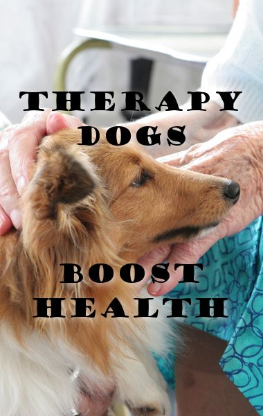 How To Train A Therapy Dog Canada