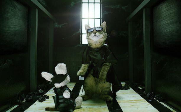 'Keanu' Cat Calendar Reimagines 12 Beloved Movies with One Adorable Kitten | August: Keanu Starring in <em>The Matrix</em> | EW.com