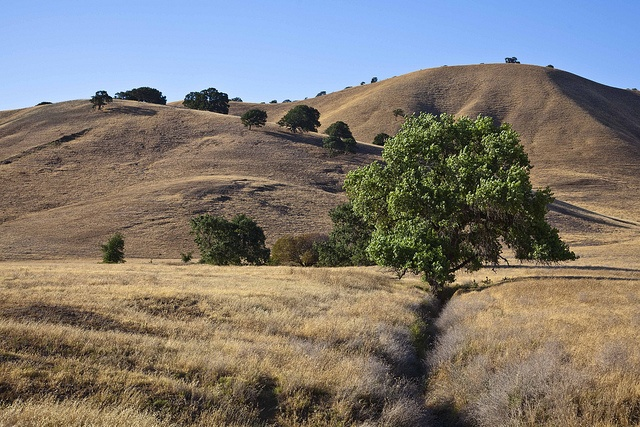 83 best contra costa county scenery images on pinterest for Deer scenery