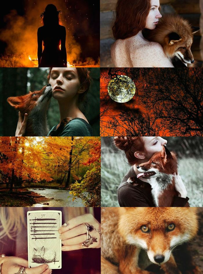 Fall Animal Wallpaper Animal Witch Aesthetics Fox Witch Requested Bird