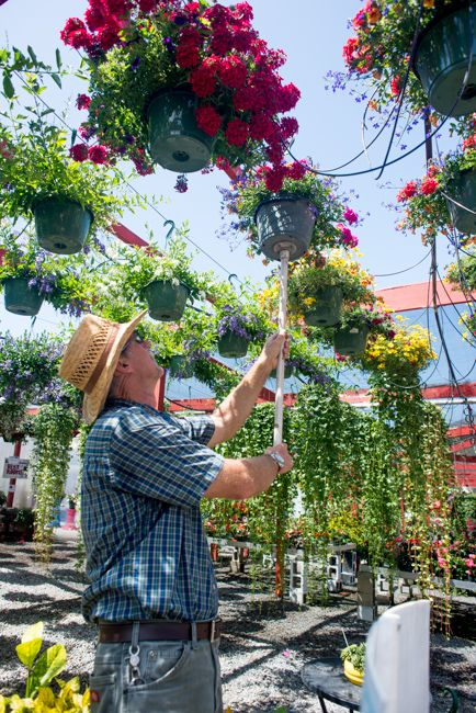Behind the scenes at Weidner's legendary nursery -- an overhead jungle of bright, bold hanging flowers! #fuchsias #impatiens #tuberousbegonia