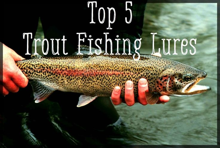 A count-down of the top 5 trout lures, all guaranteed to put more fish in the boat! Includes size and color selection, as well as tricks to rigging and effectively fishing each one.