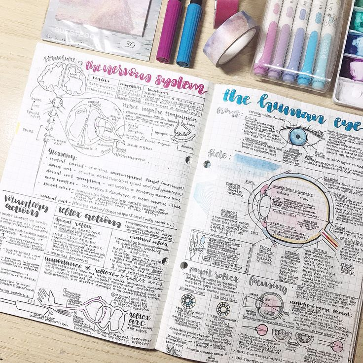 """1,998 Likes, 62 Comments - denise w existential crisis (@studynees) on Instagram: """"biology notes of the nervous system & eye ✨ this is the last biology note i can post :( if you…"""""""
