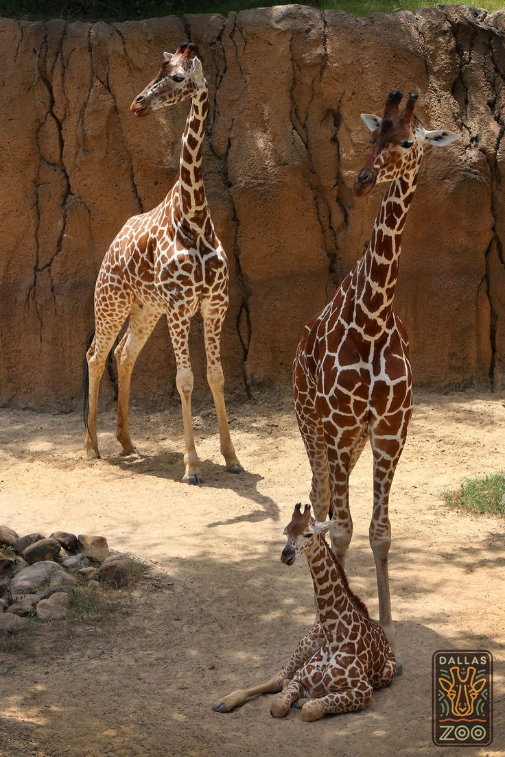Mother Katie stands over her two daughters, Jamie and baby Kipenzi.