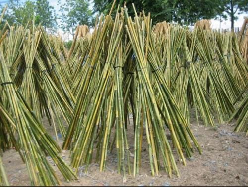 Il bambù nell'orto fornisce ottimi tutori per il sostegno delle piante