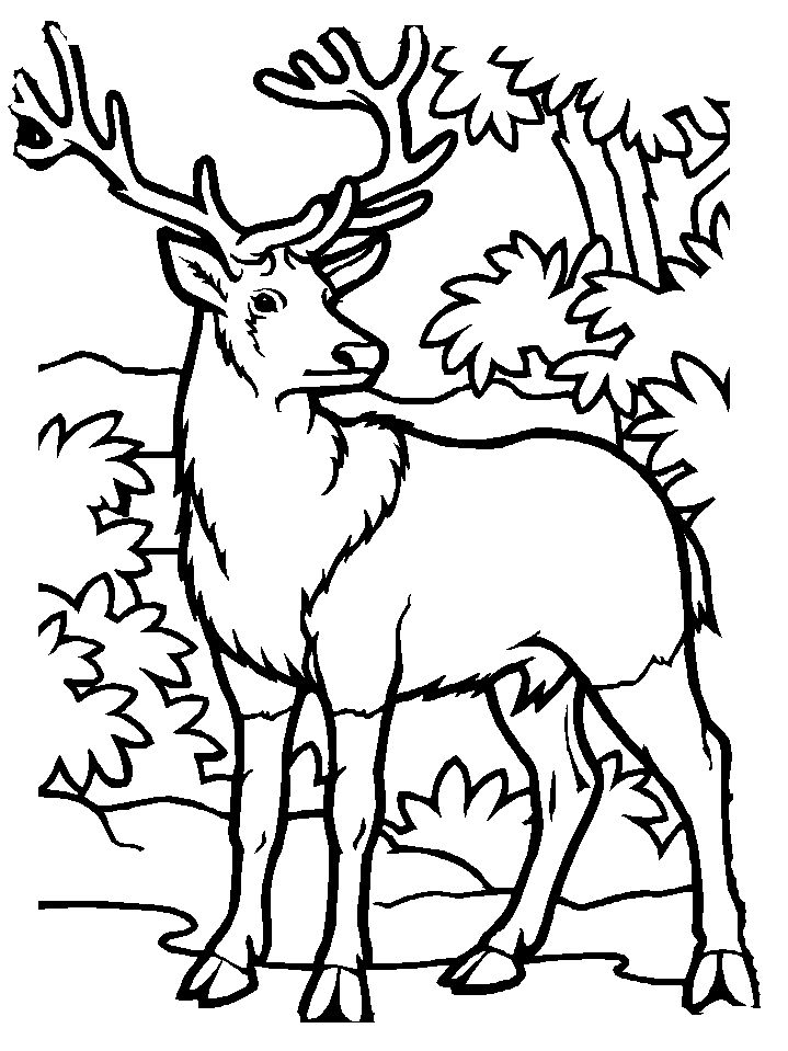 254a57f5b0820e8f101837d9618efc8d coloring pages to print animal coloring pages 10 best images about lg on pinterest fat deer