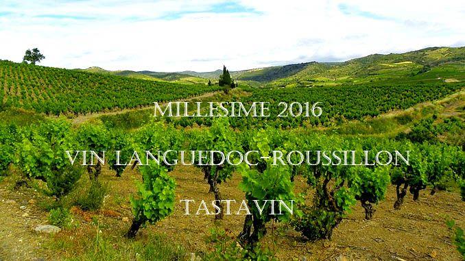 #millésime2016 #vin rouge #vin #Languedoc-Roussillon #Blogduvin #Blogvin #grenache #syrah #Carignan