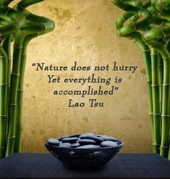 Zen Quotes On Life Simple 24 Best Zen Quotes Images On Pinterest  Zen Quotes Inspire
