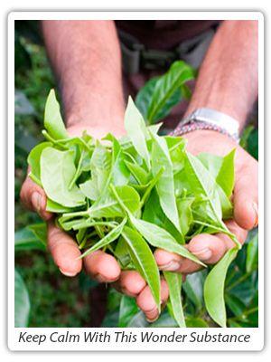Green Tea: Lesson 2 | Green Tea HP | Dr. Roger Hendrix