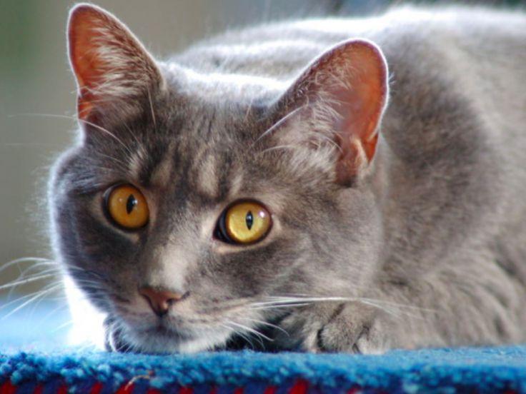 4 astuces pour se débarrasser de l'odeur d'urine de chat