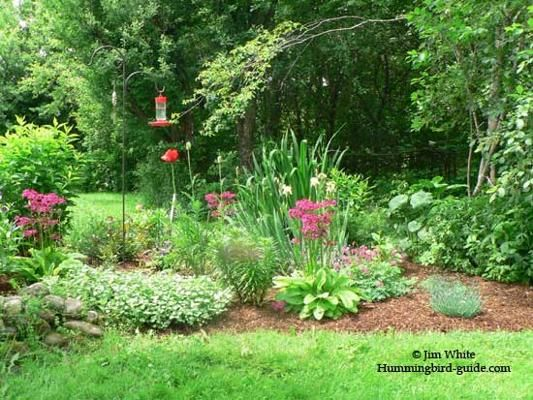 Hummingbird Garden Plans My Hot Landscaper Pinterest