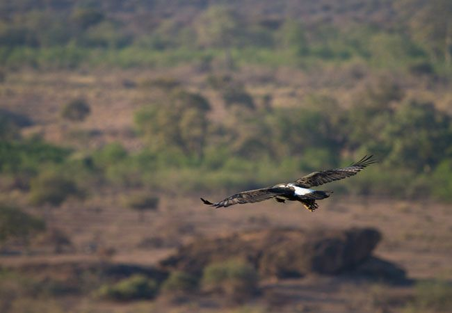 Umgeni Valley Nature Reserve