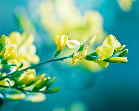 Botanische Fotografie Goldenen Blume Fotografie floral 8 x 10 8 x 12 Fine Art Fotografie Natur golden blaugrün Wand Kunst Schlafzimmer Dekor Zitrone yello