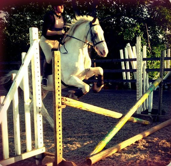 Horse Jumping with Cashmere