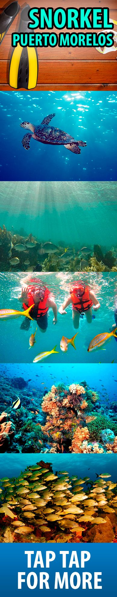 Have you ever snorkel before? These images will make you want to jump into the ocean and see all the marine life, just like this ones from Puerto Morelos, Mexico.. this is an unforgettable experience that you can not miss!