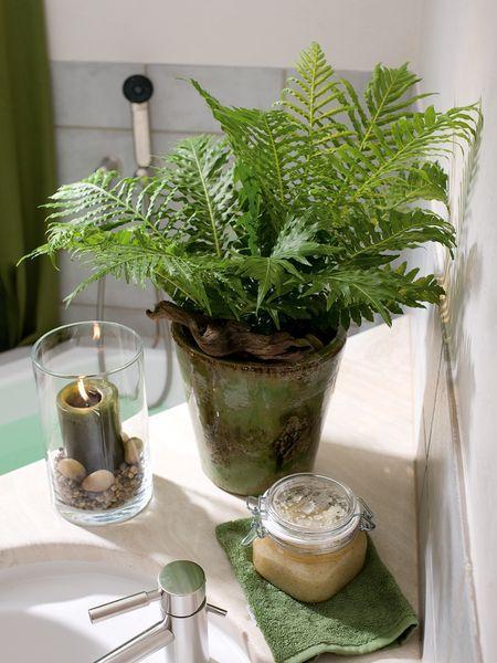 Pflanzengefässe ile ilgili Pinterestu0027teki en iyi 25u0027den fazla - pflanzen für badezimmer
