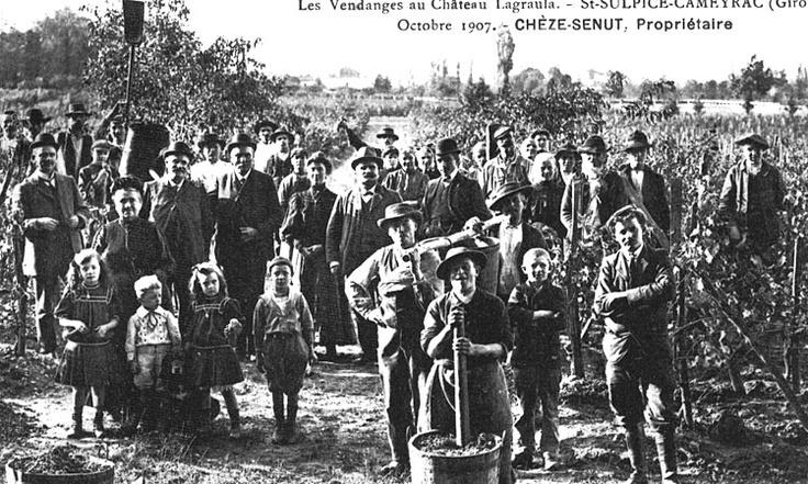 Vendanges en 1907