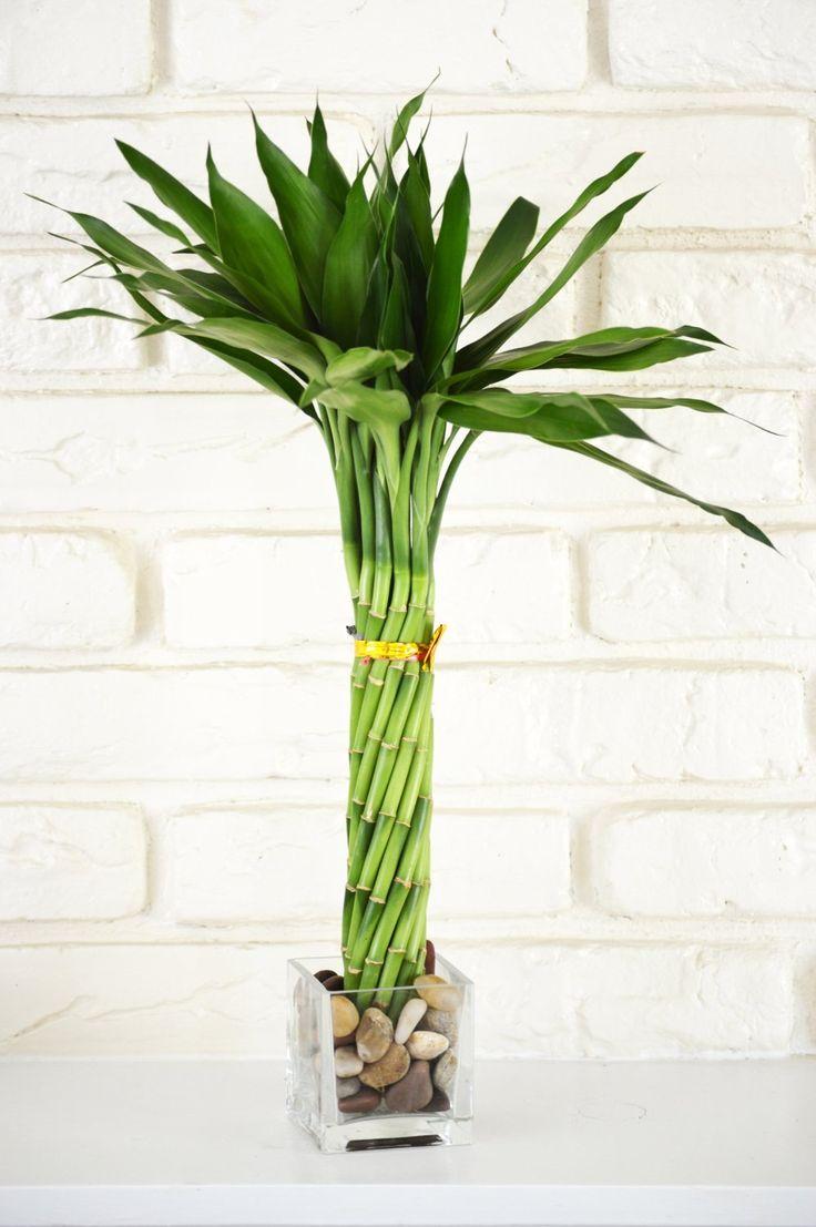 Sketch Of Unique Indoor Plants Simple Effort For Eco 400 x 300