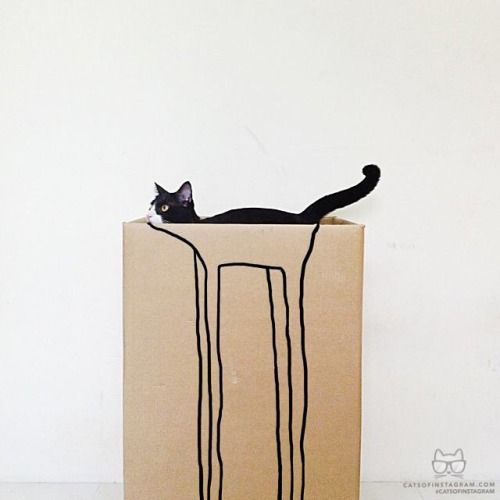 Long legged cat in a box! @Catsofinstagram.