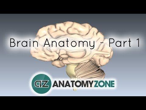 Neuroanatomy, CNS, PNS Playlist ( https://www.youtube.com/playlist?list=PLmGQgRI4QyEDCSPyYurmzj_zatY5BWz_r )