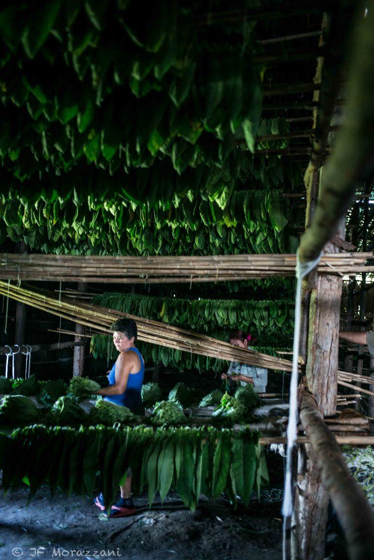 2016 | CUBA > CUMANAYAGUA ||| Foto por J-Francois Morazzani