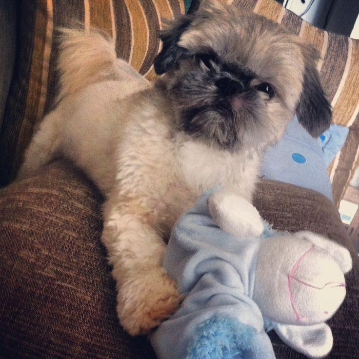 Ludovico!!! Cachorrinho tranquilo!!!!!