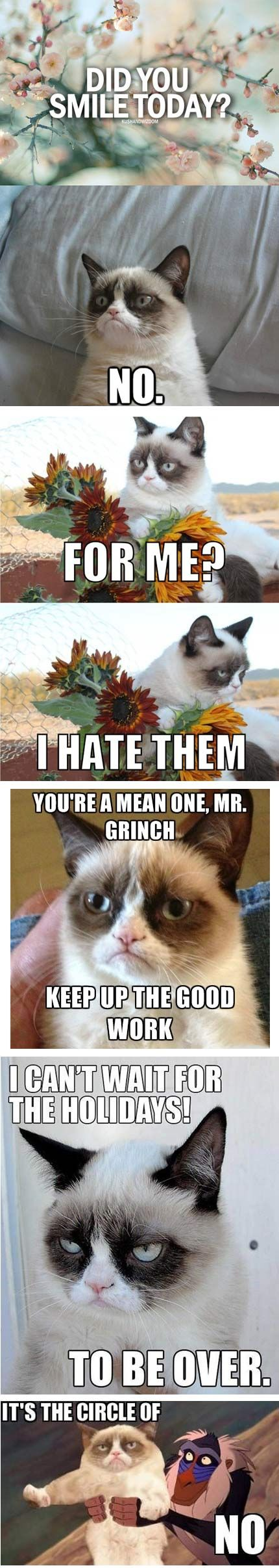 The Best Of Grumpy Cat...Click on the pic to see funnier ones!