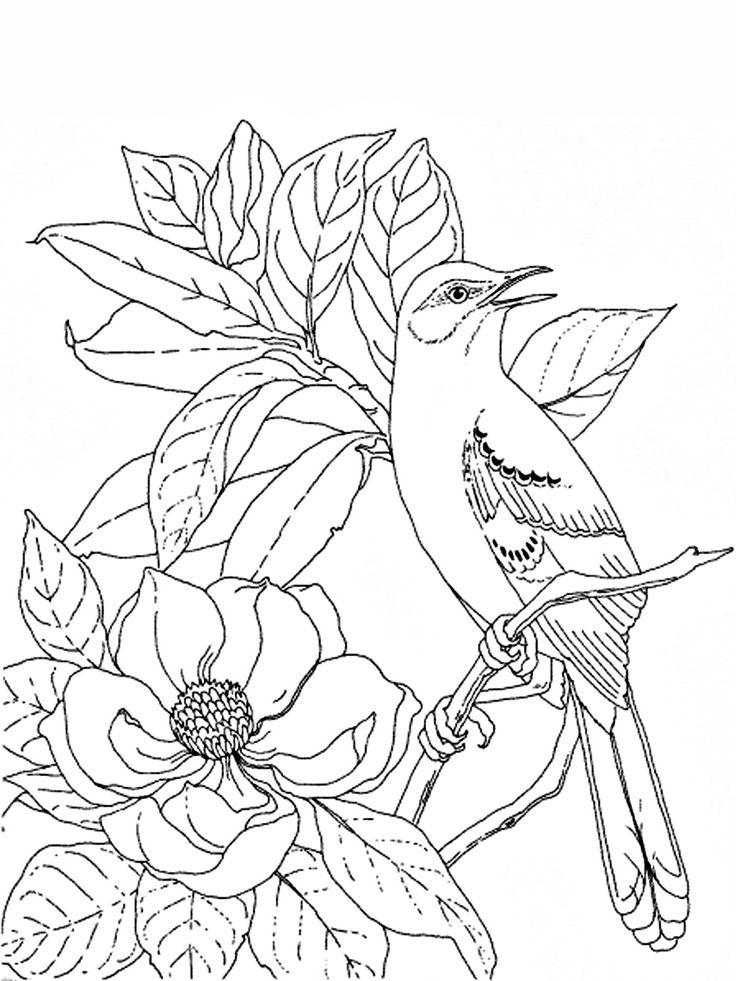 birds9.jpg (1200×1600)