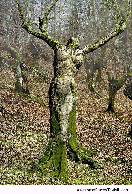 mother nature images - Google Search