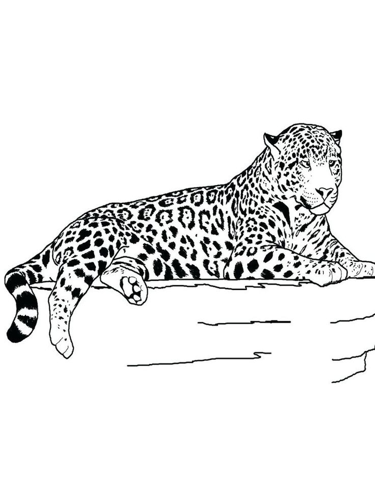 27++ Cheetah girl coloring pages ideas