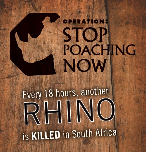 About 1 month ago the stat was one rhino poached for every 36 hours which passed, this year rhino poaching has become so intense that the stat is now one rhino poached every 18 hours. WE NEED YOUR HELP! PLEASE DONATE TO THESE RHINO CAUSES!!