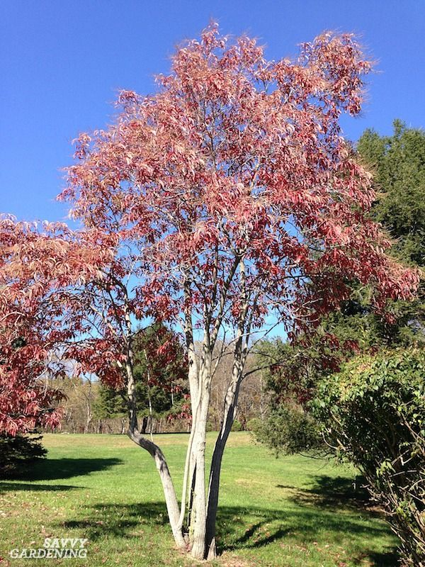 Flowering Trees For Home Gardens 21 Beautiful Choices Flowering Trees Gardening Techniques Tree