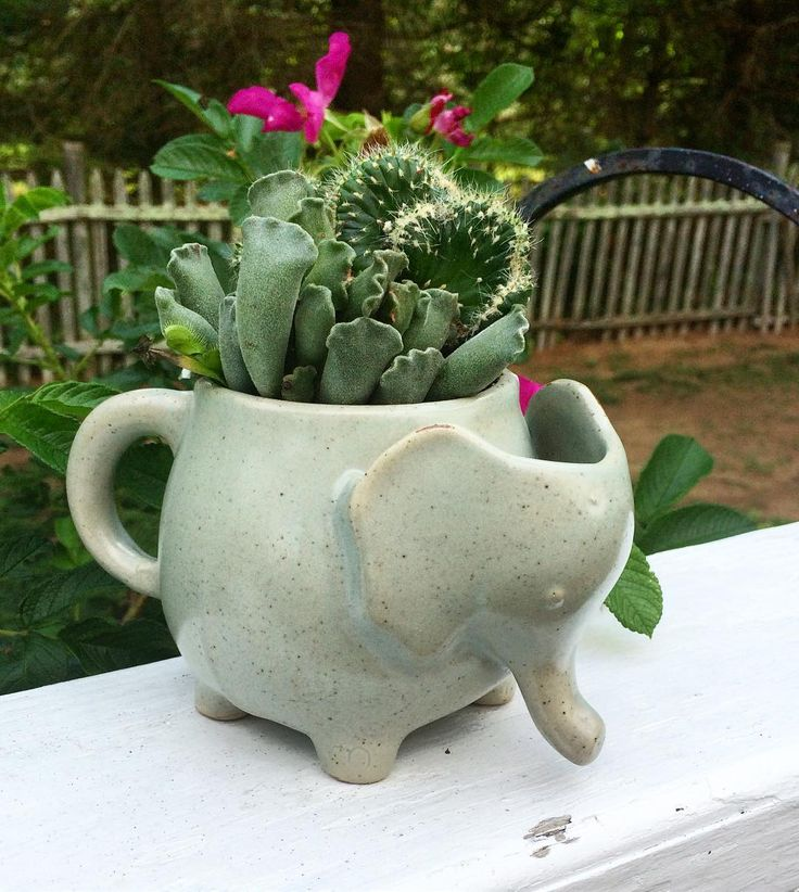 Throw A Succulent In It | Fine Gardening Magazine