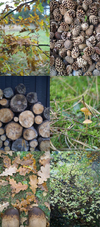 autumn  photos: Sidsel Gaustadnes, spagat